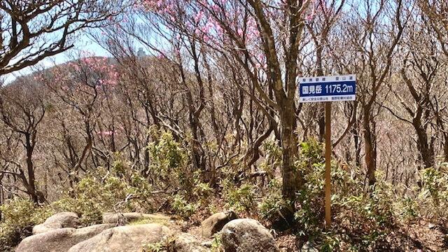 国見岳山頂1,175m