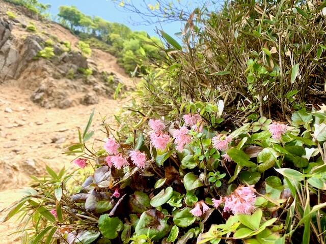 鎌ヶ岳のお花