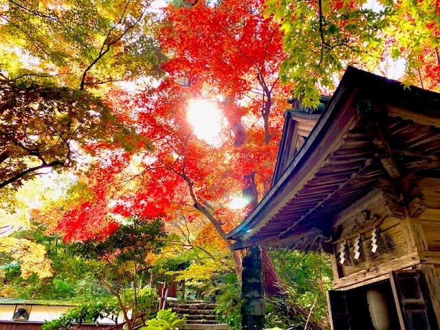 旅館寿亭の庭園秋